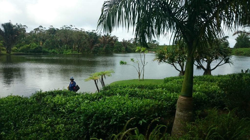 Bois Cheri Tea Factory in Mauritius (Copyright: Eugene Yiga)